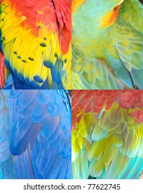tiled abstract collection of colorful Macaw parrot bird feathers with red,green,yellow&blue patterns&textures as animal background. feathers from scarlet,northern green winged,military&hyacinth macaw