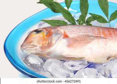 Tilefish Stock Images, Royalty-Free Images & Vectors ...