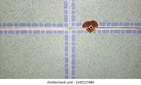 Tiles wall drilling is broken
