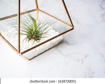 Tillandsia Ionantha air plant inside gold terrarium, set against white rocks, beautiful marble tabletop decor