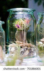 Tillandsia ionantha with blossoms, planted on wood in a decorative jar.