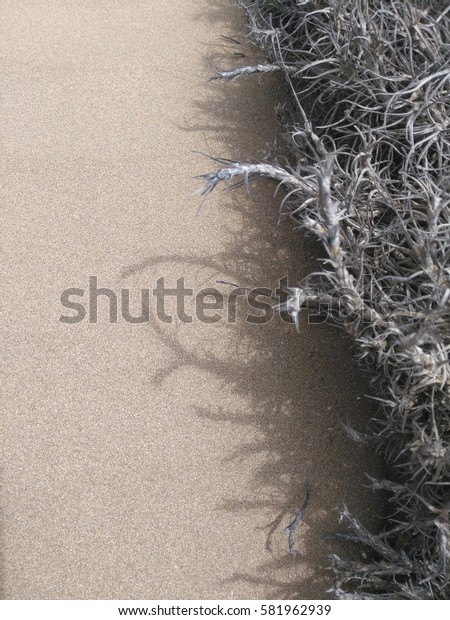 Tillandsia plant and its shadow on the sand