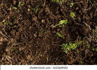 Tilled soil with plants and seedlings for backgrounds