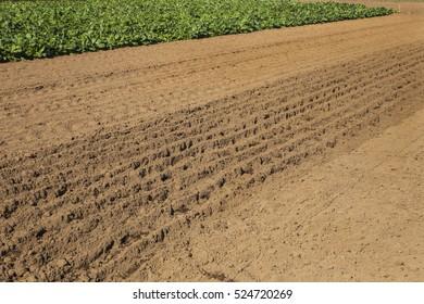 Tilled soil ready for planting at neighborhood garden in Nakaikegami, Tokyo, Japan