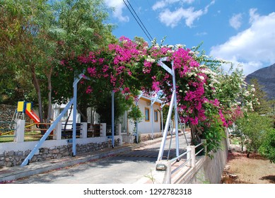 TILOS, GREECE - JUNE 16, 2018: A street shaded by Bougainvillea flowers in Megalo Chorio on the Greek island of Tilos. The village is the Capital of the island which has a population of around 780.