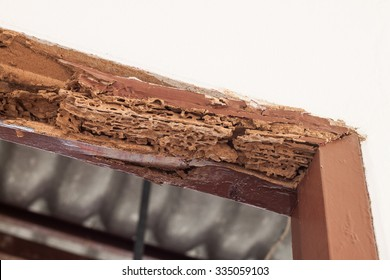 Timber beam of door damaged by termite which eat for a long time