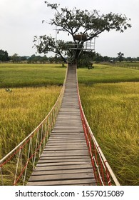 A timber bridge or wooden bridge in swamp and simple suspension bridge in rice fields