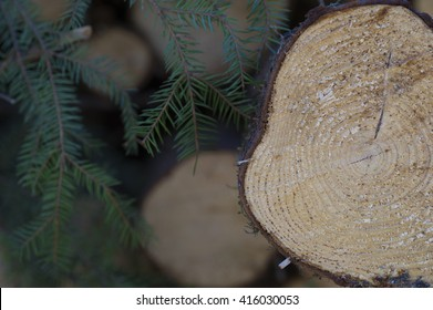 Timber in the forest.