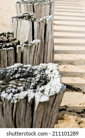 Timber groynes on the beach  at the north sea, Holland