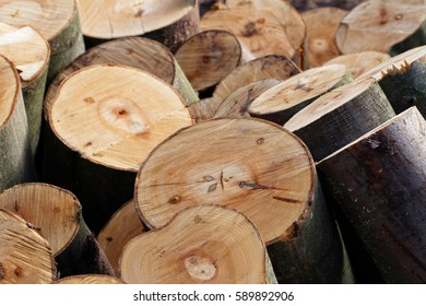 Timber Harvesting: Pile of Freshly Cut Beech Tree Sections