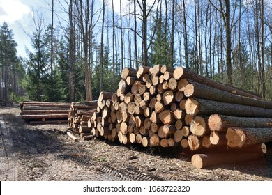 Timber industry. Cut tree trunks in the forest, Europe.