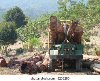 Timber Logging in Vietnam's Central Highland