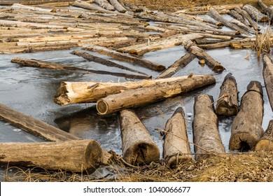 Timber Logs on frozen Lake water