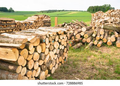 Timber logs on a lumberyard in a springtime field environment