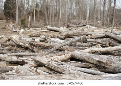 timber logs pile in woods