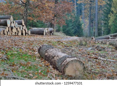 timber ready for transport, South Bohemia, Czech Republic