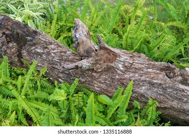Timber rotting in the grass