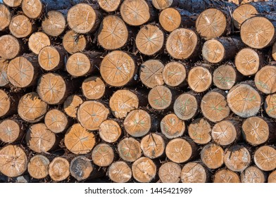 Timber storage area where a large amount of wood is stored.
