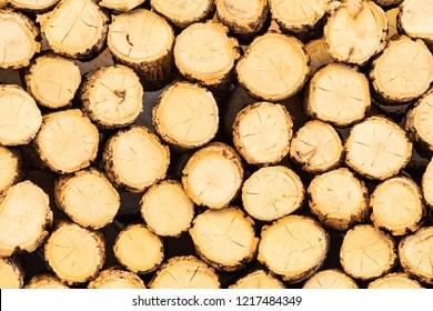 timber of Tanaka bark, Tanaka is a famous cosmatic of Myanmar