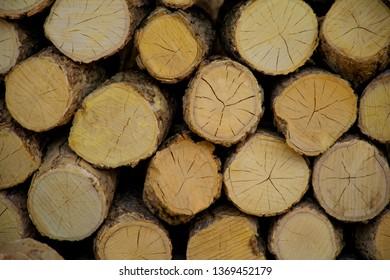 Timber of Tanaka ,Myanmar.