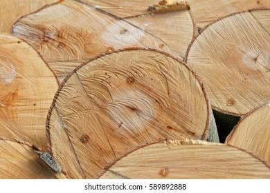 Timber Textures: Cross-Section of Freshly Felled Beech Trunks