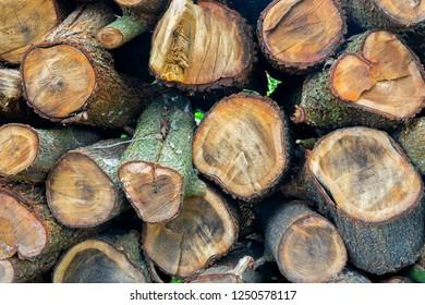 timber wood log background wallpaper