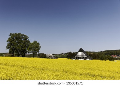 Timbered house with rape field in Lower Saxony, Germany, Europe