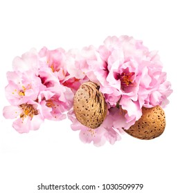 the time of flowering almonds. Spring . delicate pink almond blossoms without leaves close-up isolated on white background