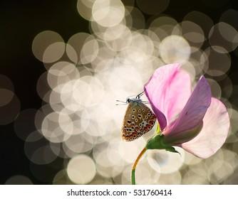 Time to sleep - Shutterstock ID 531760414