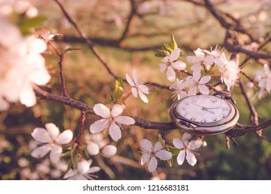 Time for spring in the morning sun in a tree blooming with white flowers