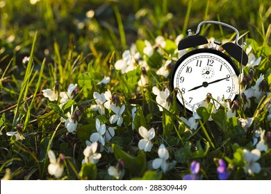 TIme is ticking in the grass