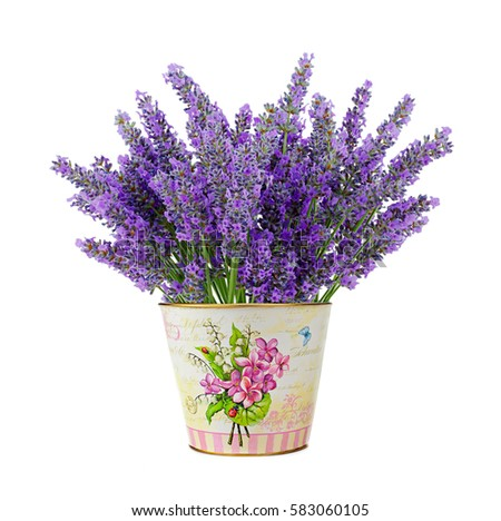 Tin Vase Lavender Flowers Isolated On Stock Photo Edit Now