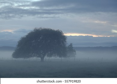 A tinted and soft impressionist view of a foggy morning across a field with one large tree. The fog and drizzle give a delightful softness and calming effect to this photo in the Bay of Plenty, NZ.