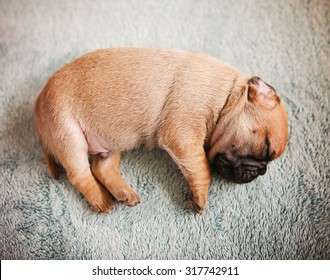 Newborn Puppy Images Stock Photos Amp Vectors Shutterstock