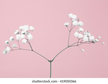 Tiny baby's-breath flower (gypsophil) on a soft pink background