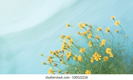 Tiny beautiful yellow flower over blue wall, selective focus