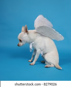 a tiny chihuahua with angel wings