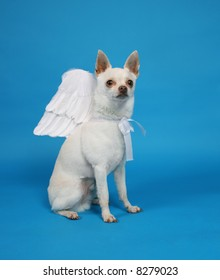 a tiny chihuahua with angel wings on