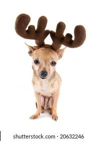 Deer Head Chihuahua Images Stock Photos Vectors Shutterstock
