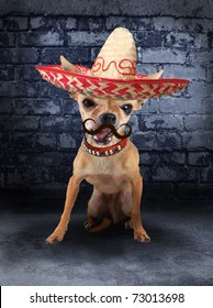 a tiny chihuahua with a sombrero hat on (from the mustache series)