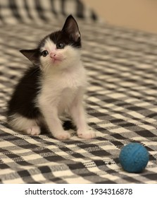 tiny cute black and white kitten on the couch close up
