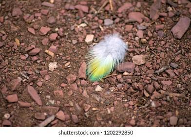 Tiny feather on ground, Wilpena Pound, SA, Australia