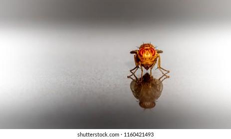 A tiny fly (macro)