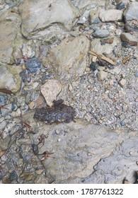 Tiny frog hopping along downhill next to a tiny stream