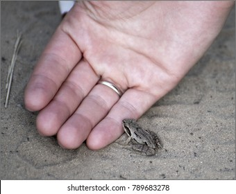 A tiny frog jumped out onto the road. A good man offers his protection and help. Humanity. Kindness. Spring.