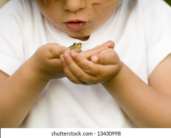 Tiny frog on hands