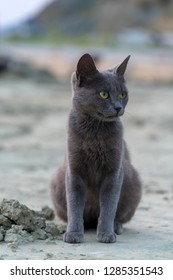 tiny gray stray cat with green eyes standing