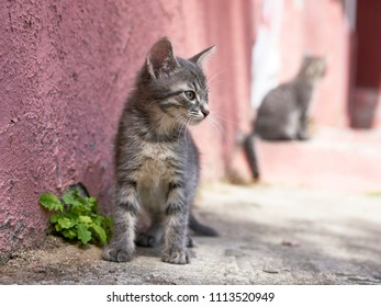 Tiny grey kitten in sunny day