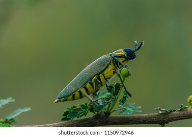 Tiny Insects And The Nature