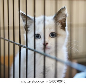 a tiny kitten in an animal shelter, waiting for a home